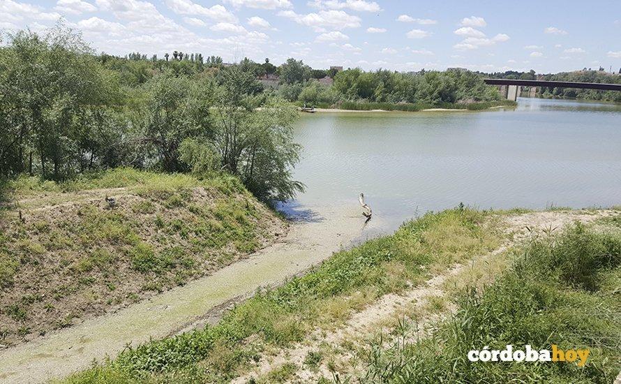 Obras de limpieza y canalización del Guadalquivir en Córdoba