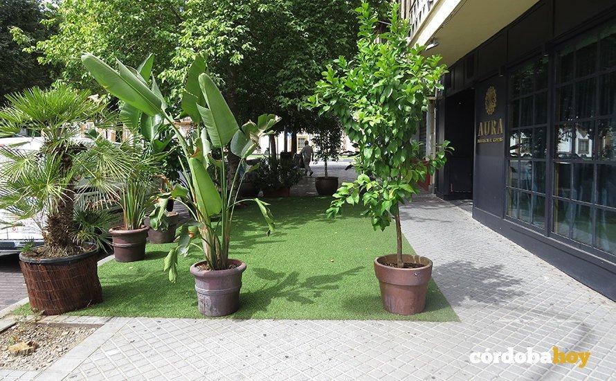 Plazas Flor Del Olivo Y Colón Los Problemas Con Las